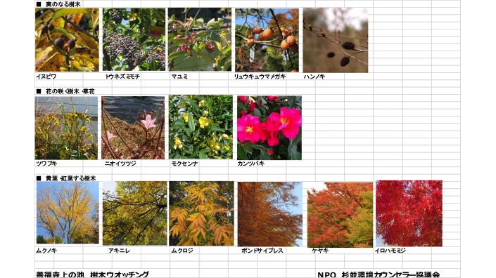 善福寺公園にて樹木ウオッチング