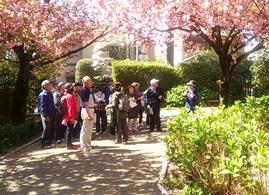 春爛漫・善福寺川ウォーキング(花と樹木の観察会)