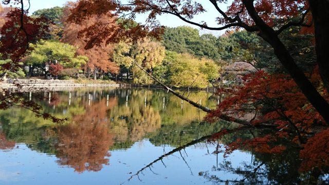 善福寺上池  冬の樹木観察会