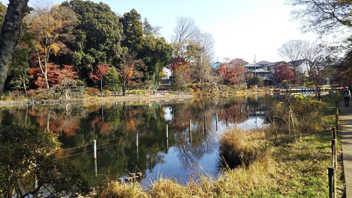 善福寺上の池 樹木観察会 20201213