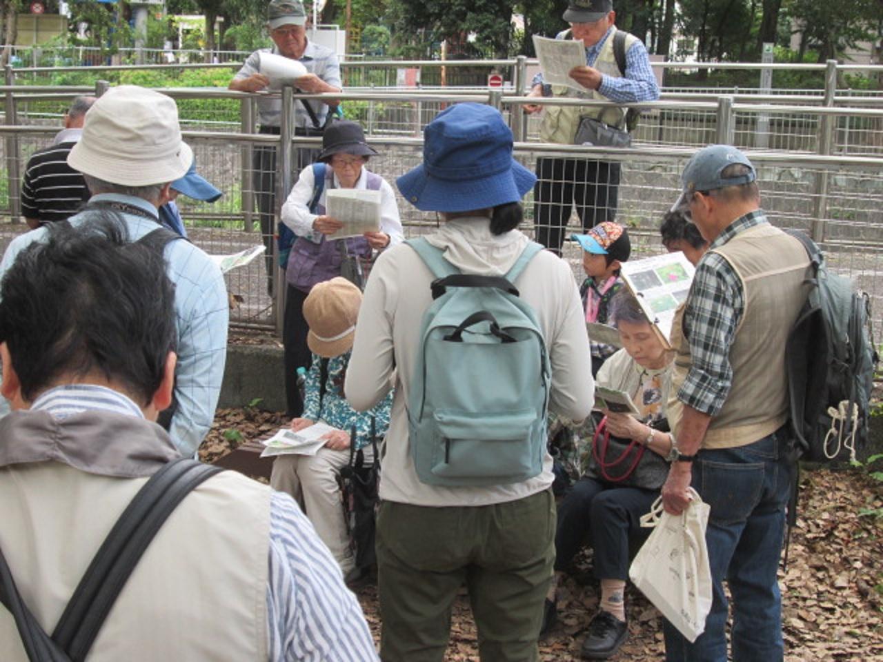 秋の善福寺川の帰化植物観察会